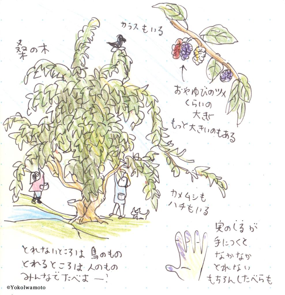 桑の実を摘む